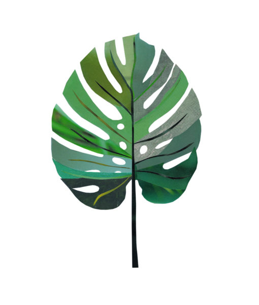 Monstera-Janine-Sommer-1